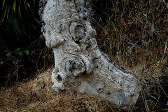 Baumgesichter - Schlechte Laune heute?