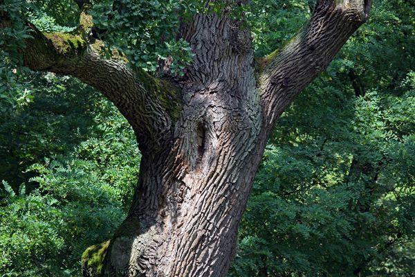 Baumgestalt