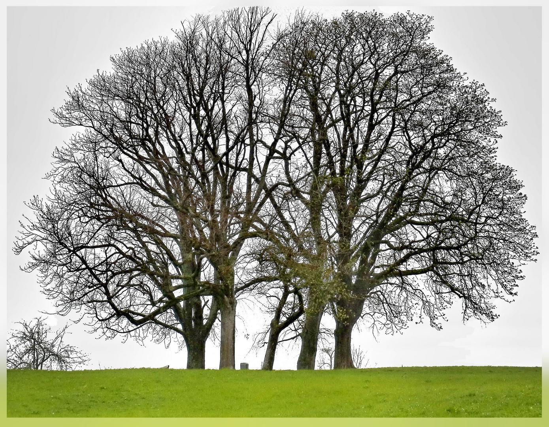 Baumgrüppchen zum OsterWE-Start