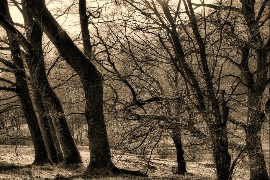 Baumgruppe am Steilhang