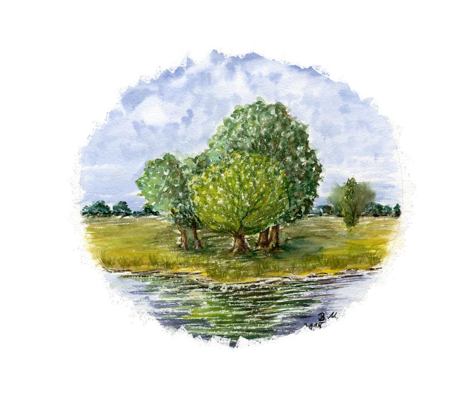 Baumgruppe an der Elbe