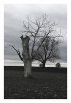 Baumgruppe bei Burgsdorf
