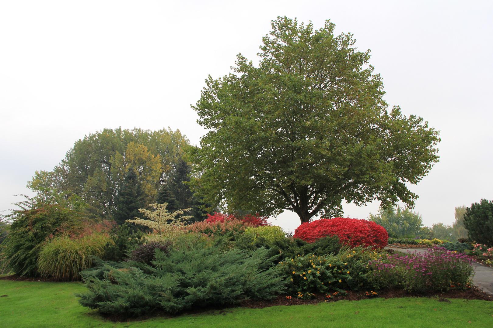 Baumgruppe im Oktober