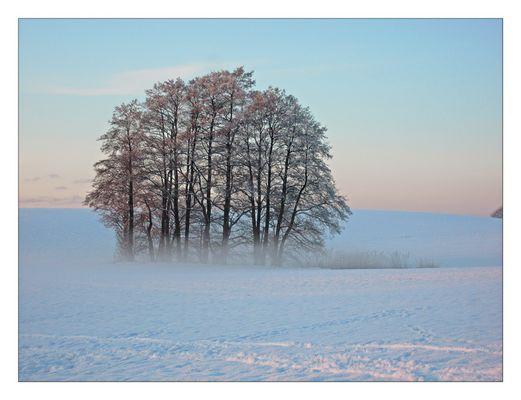 Baumgruppe im Schnee mit Nebel