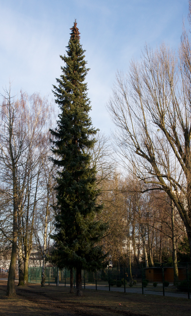 Baumgruppe im Volkspark (4)
