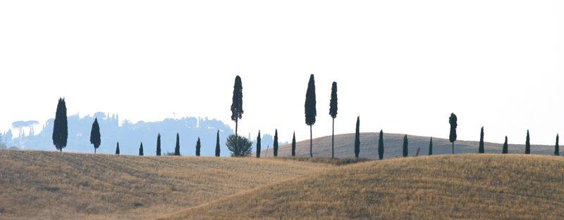Baumgruppe in der Toscana