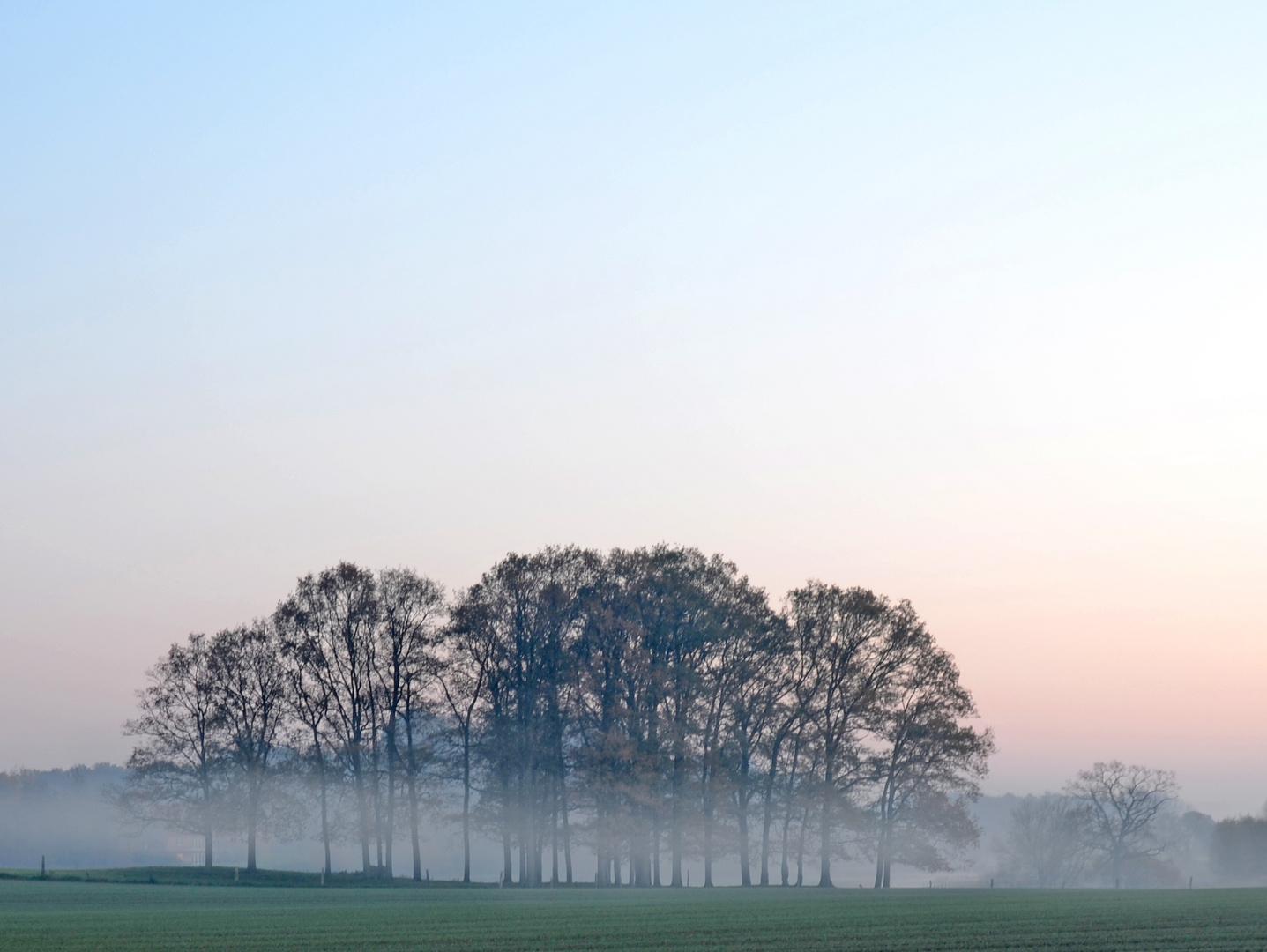 Baumgruppe mit Nebelaufstieg Anfang November