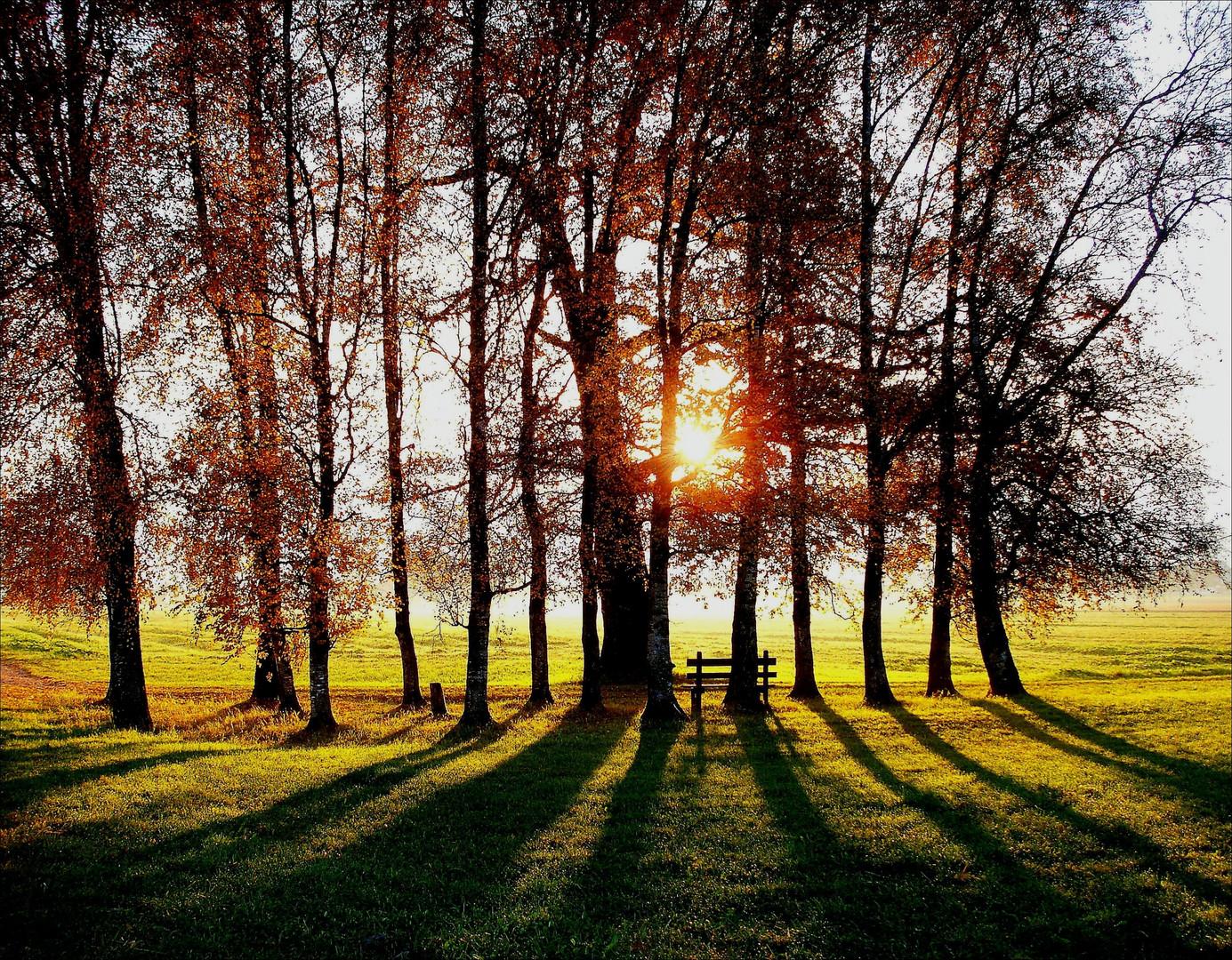 Baumgruppe mit Ruhebank