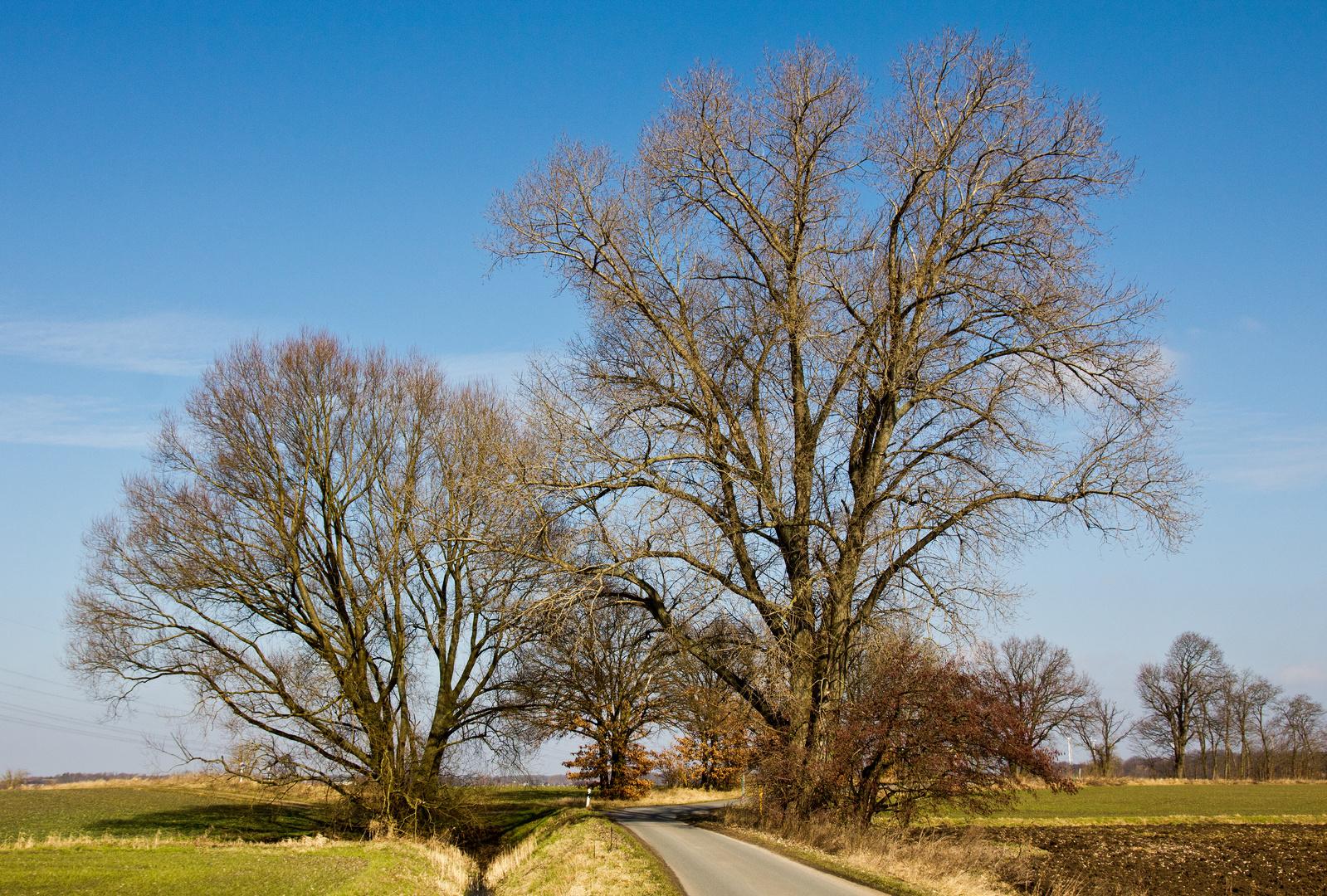Baumgruppe ohne Laub