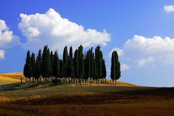 Baumgruppe südlich Siena
