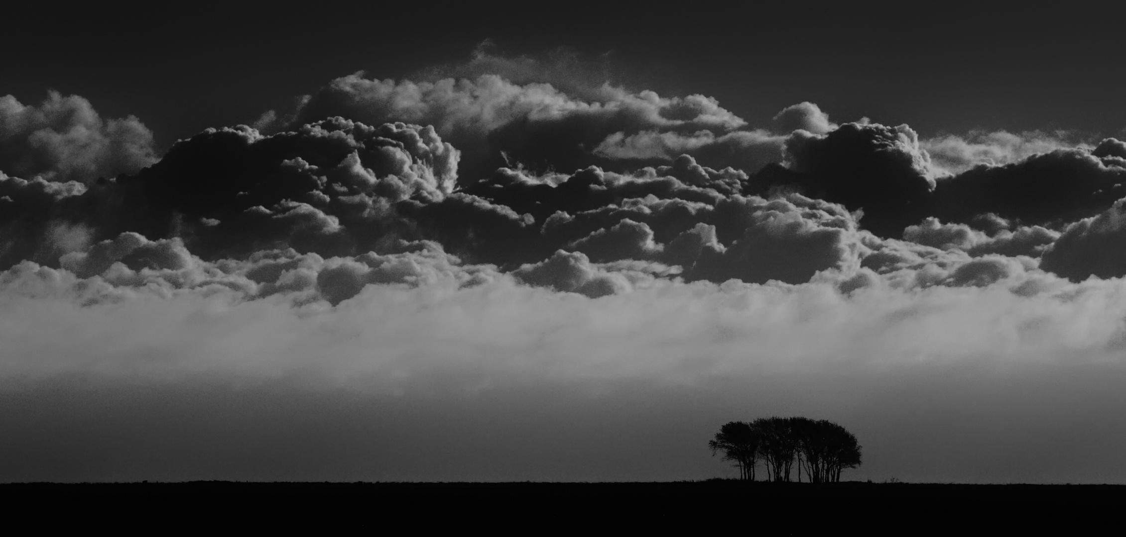 baumgruppe unter wolken ...