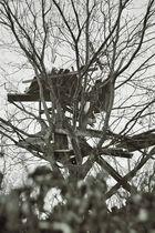 Baumhaus der Nachbarskinder