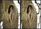 Baumhöhle [3D]
