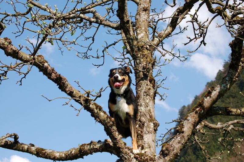 Baumhund 2