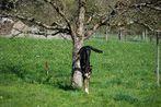 Baumhund 3