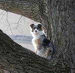 - Baumhund -