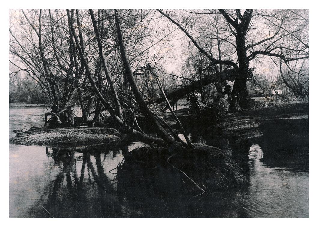 Bauminseln I