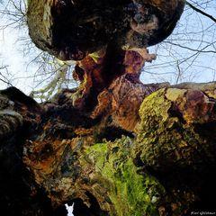 Baum/Körper/Welten
