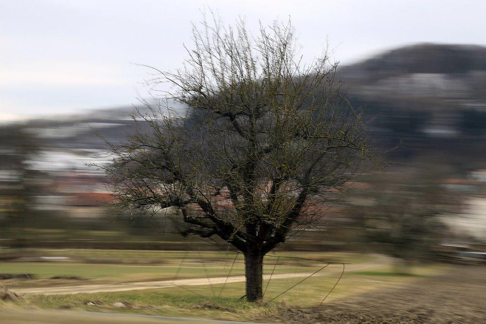 Baumkreisel
