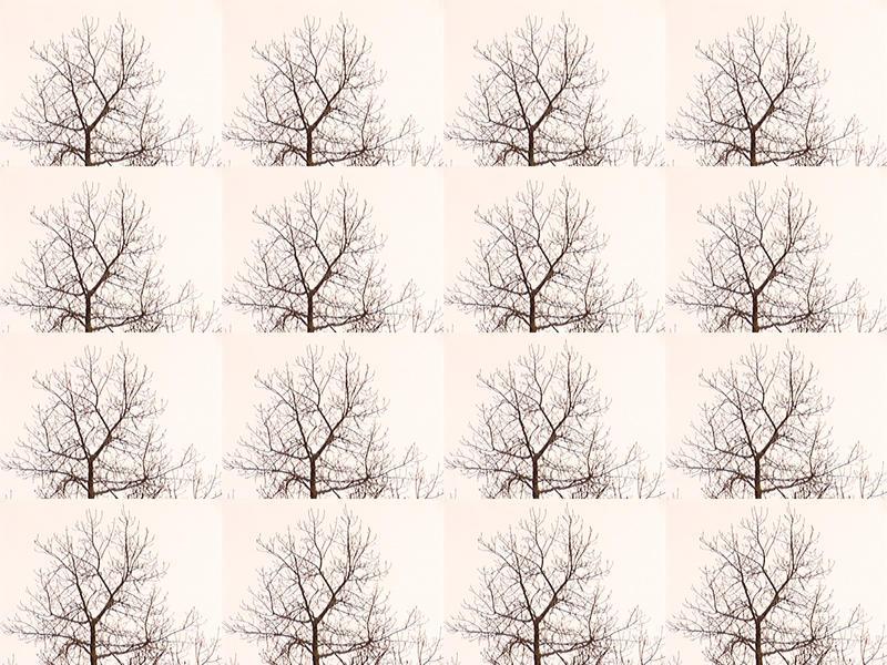 Baumkrine Serie