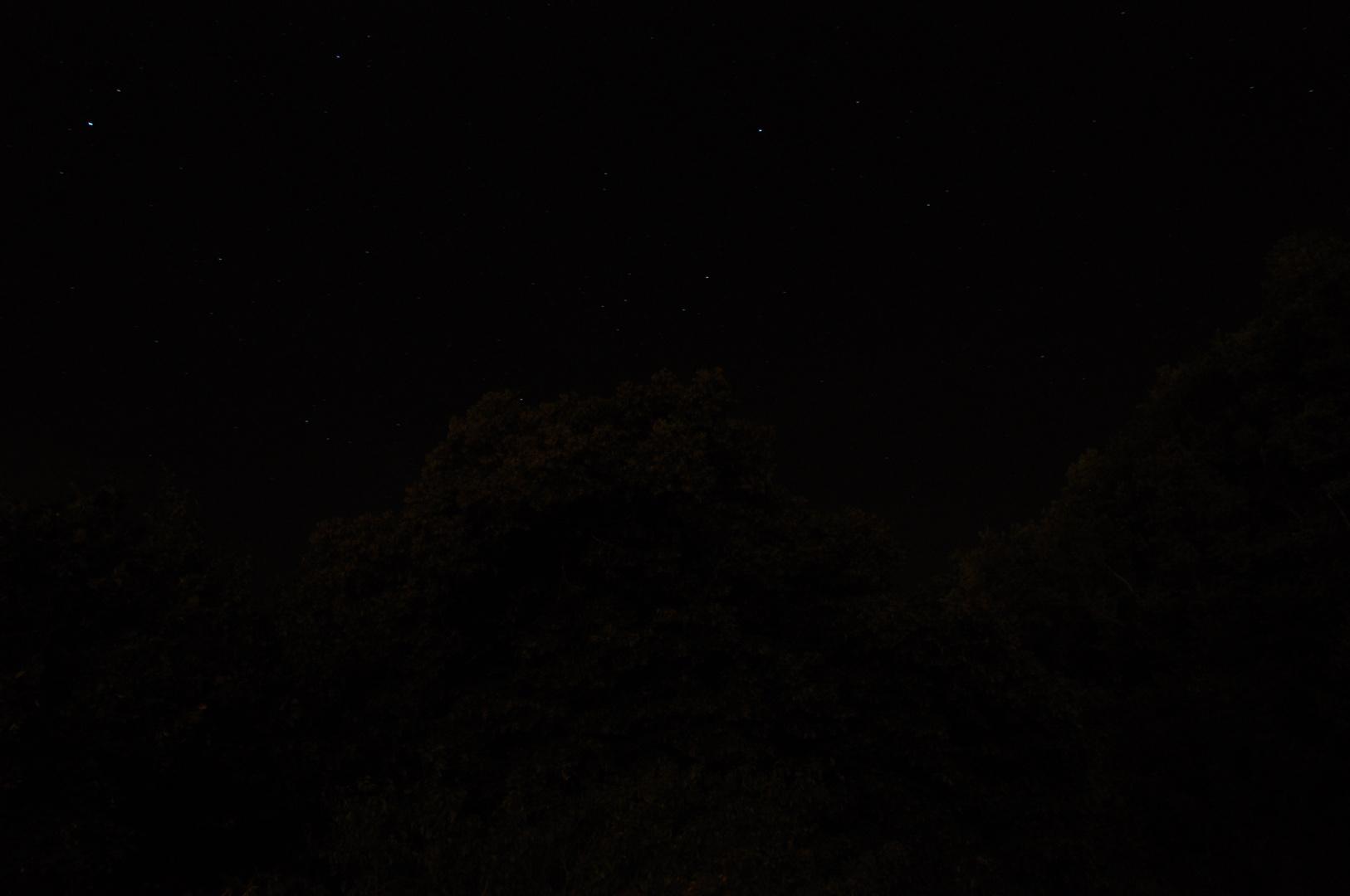 Baumkrone mit Sternenhimmel