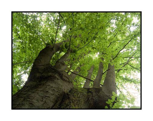 Baumkrone und Stamm in Aufsicht