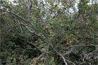 Baumkronenpfad (3)