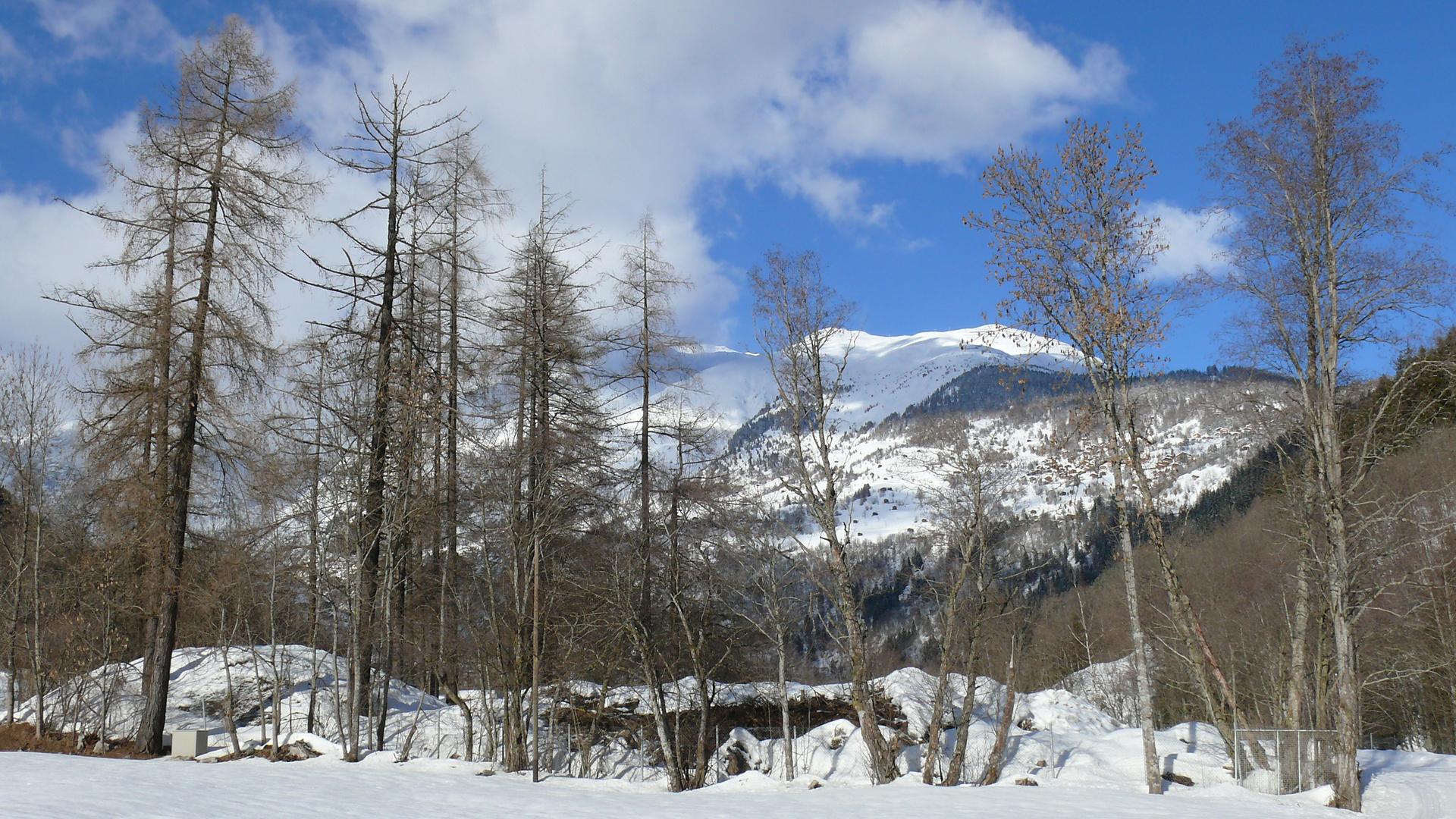Baumkulisse vor Bergmassiv
