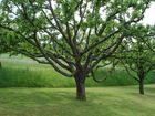 Baumkultur