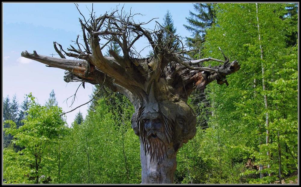 Baumkunst - gesägt