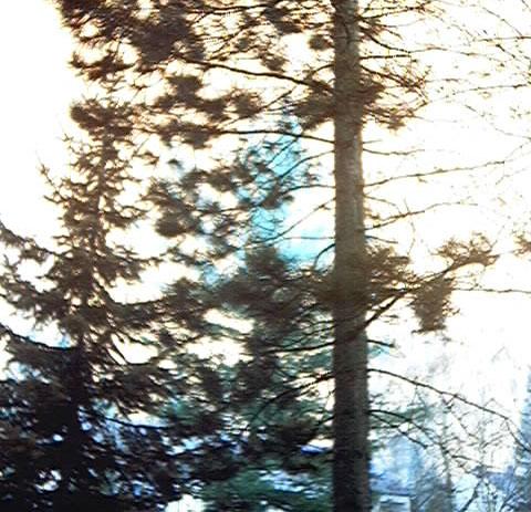 Baumläufer