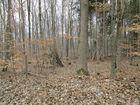 Baumlager im Wald