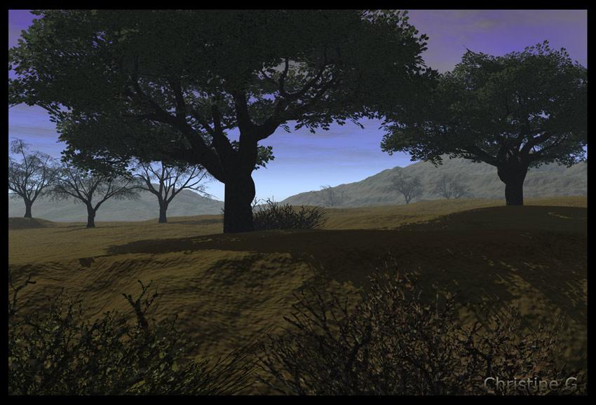 Baumlandschaft gegen Abend