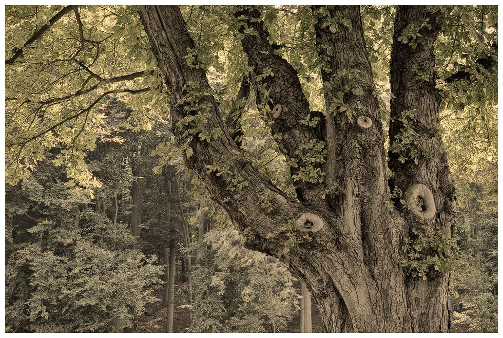 Baummalerei