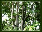 Baummotiv im Gegenlicht