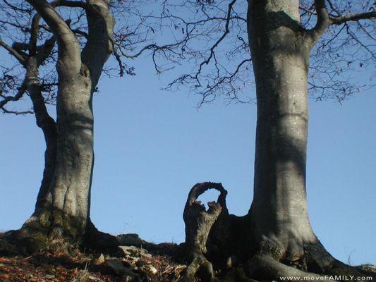 Baumpaar wartet im Solothurner Jura auf den Winter