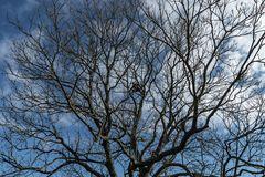 Baumpflege auf unserem Grundstück
