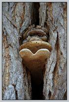 Baumpilz mit Herz