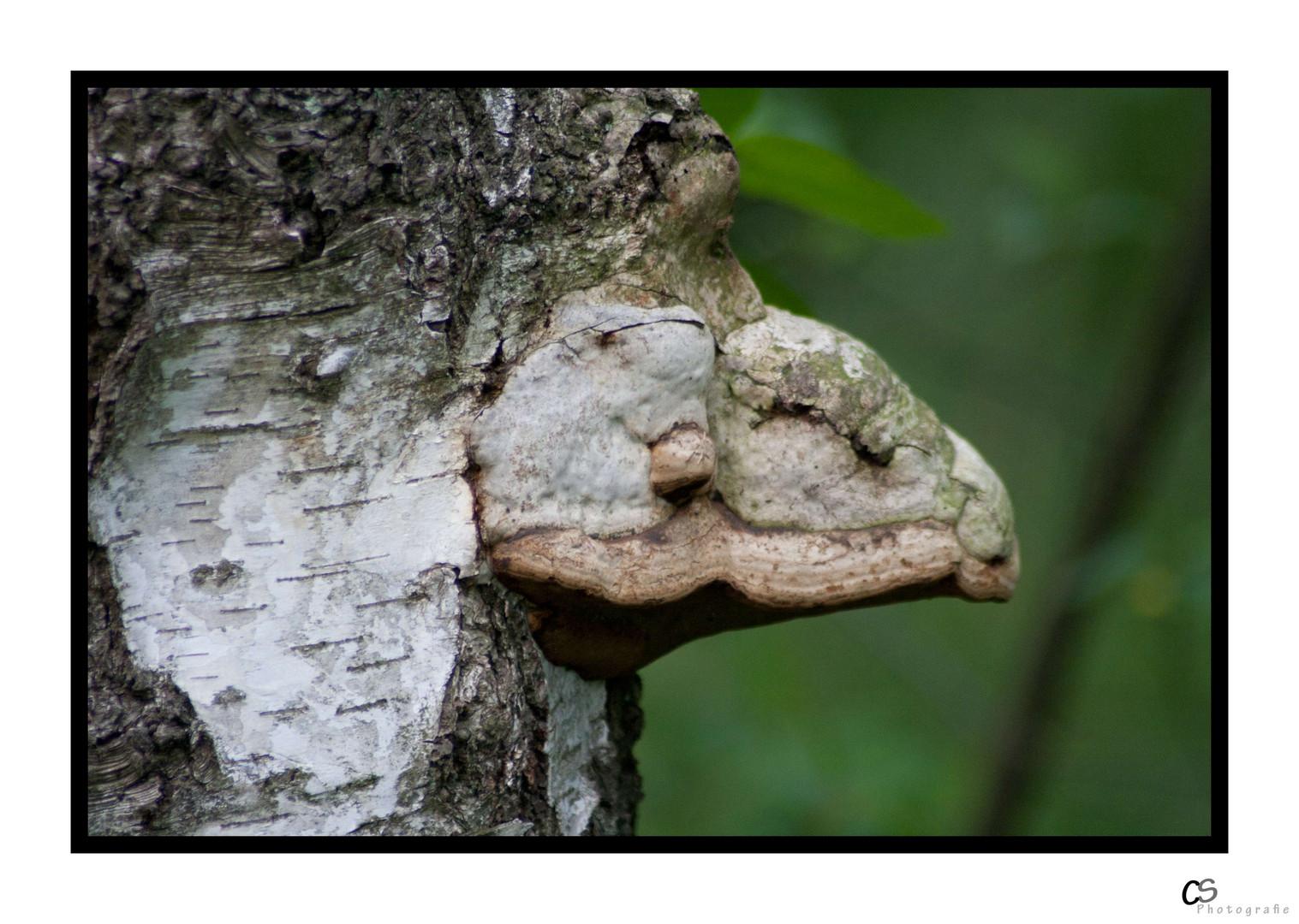 Baumpilz - oder doch ein verstecktes Wesen???