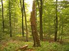 Baumpilz oder Pilzbaum