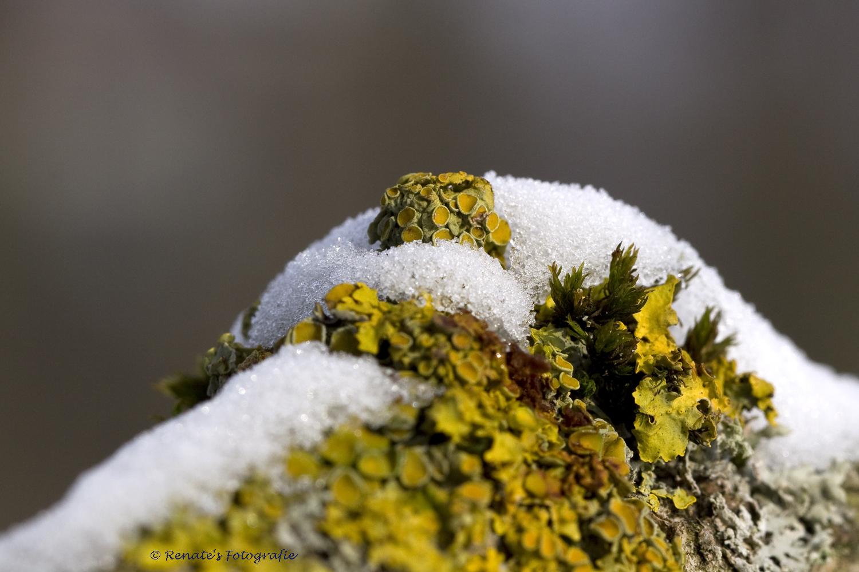 Baumpilze im Schnee