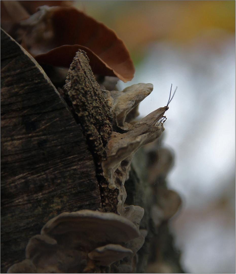 Baumpilze sind sehr geeignete Aussichtsplattformen ....