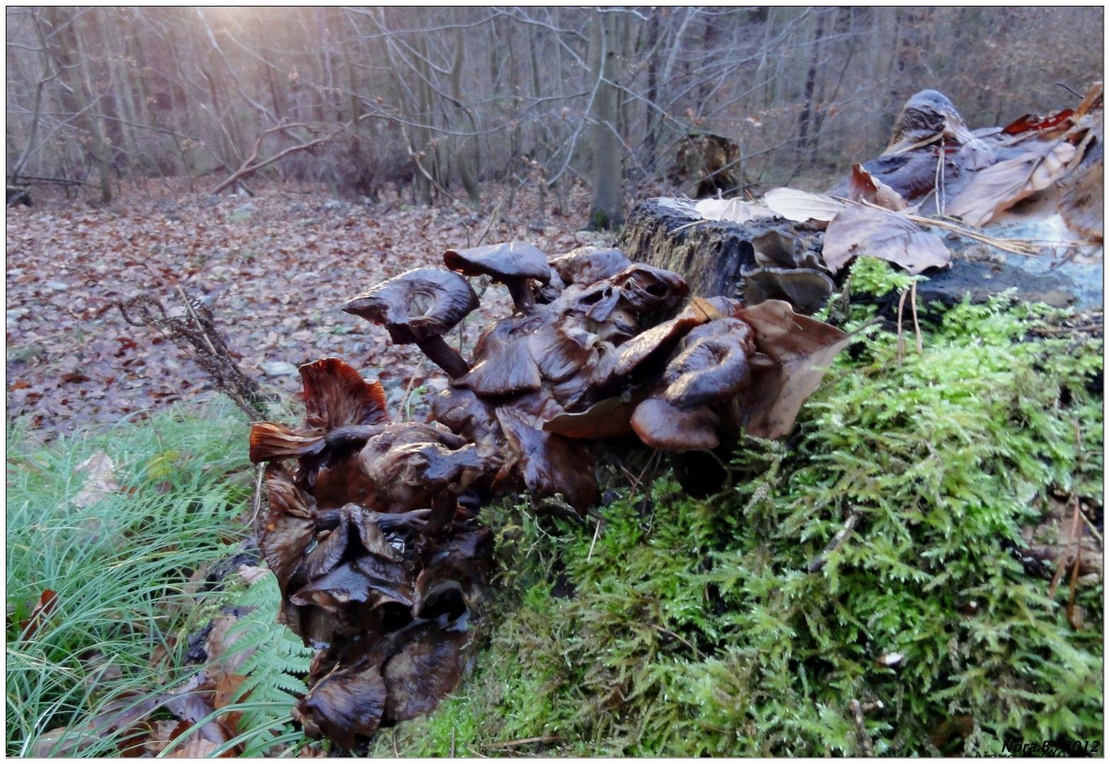 Baumpilze und Flechten im Winter