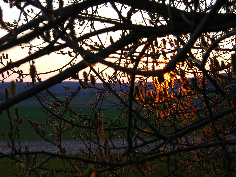 Baumpollen im Sonnenlicht