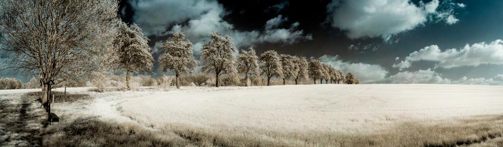 Baumreihe am Gebergrund