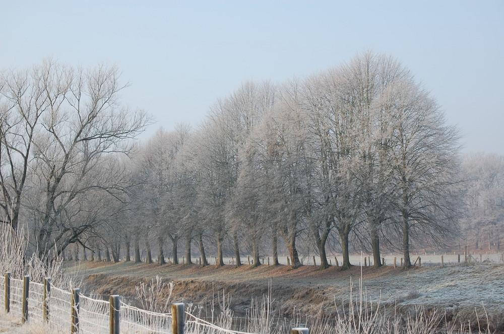 Baumreihe am Haseufer in Löningen im Dezember 2008
