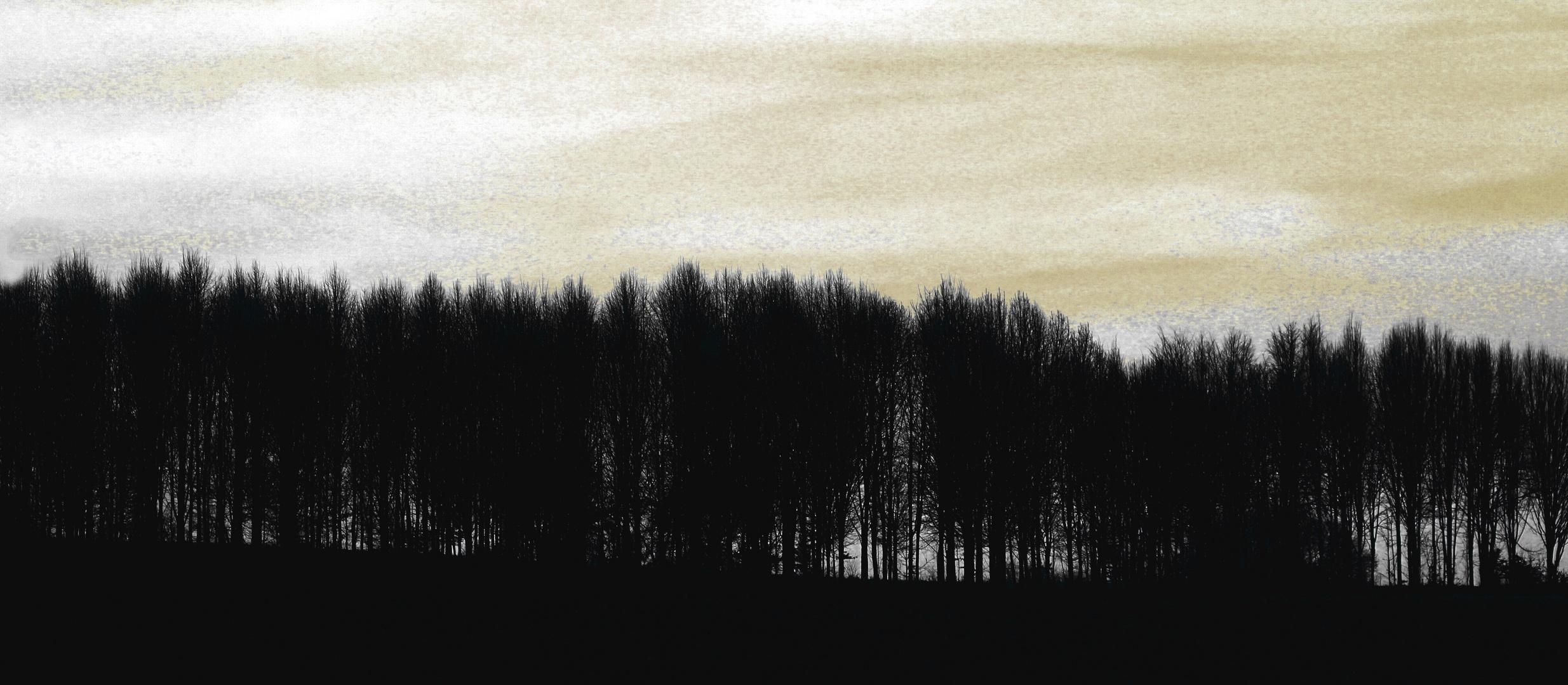 Baumreihe bei Molsberg
