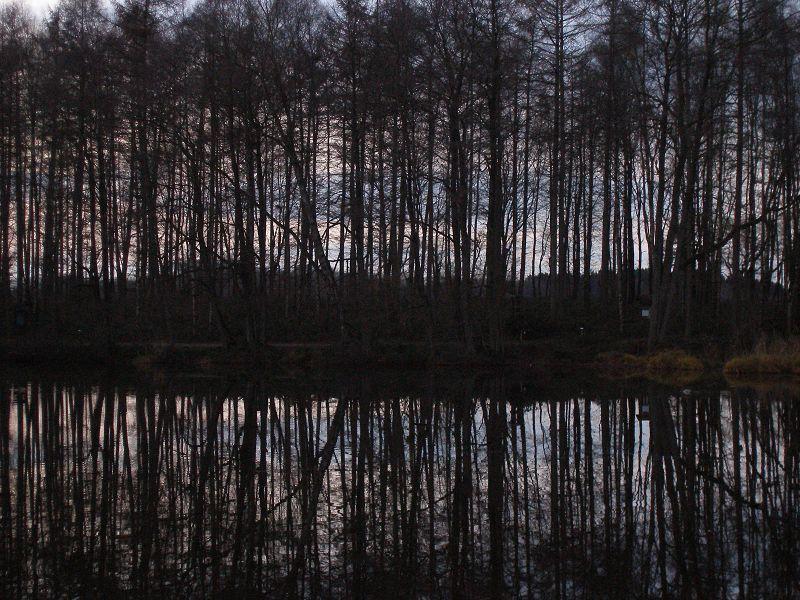 Baumreihe mit Spiegelung