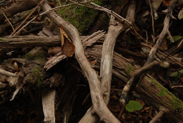 Baumreste im Herbstwald