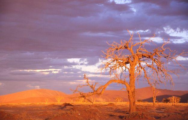 Baumruine in der Namibwüste 1